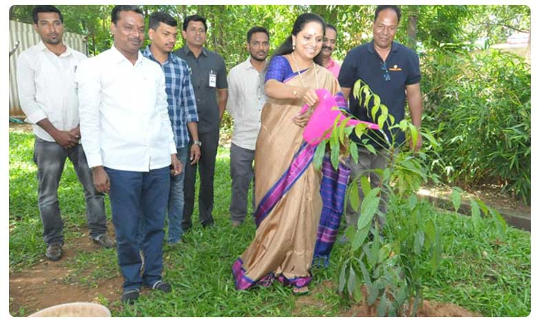 EX MP Kavitha accepts green challenge