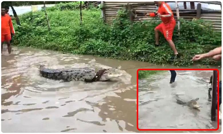 Water In Kurnool Recedes, More Crorodiles Seen On Nandayala Farms