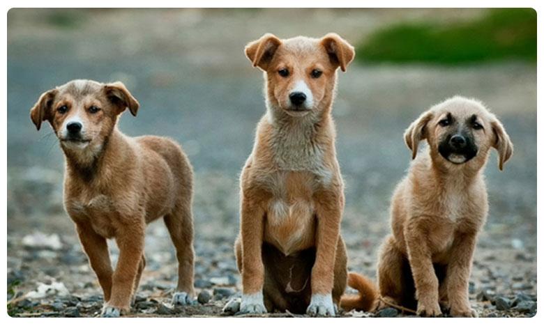 Ninety Street Dogs Found Killed In Buldhana Of Maharastra