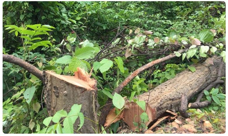 Penalty for Cutting Tree in Siddipet, చెట్టు నరికినందుకు రూ.30 వేలు జరిమానా..