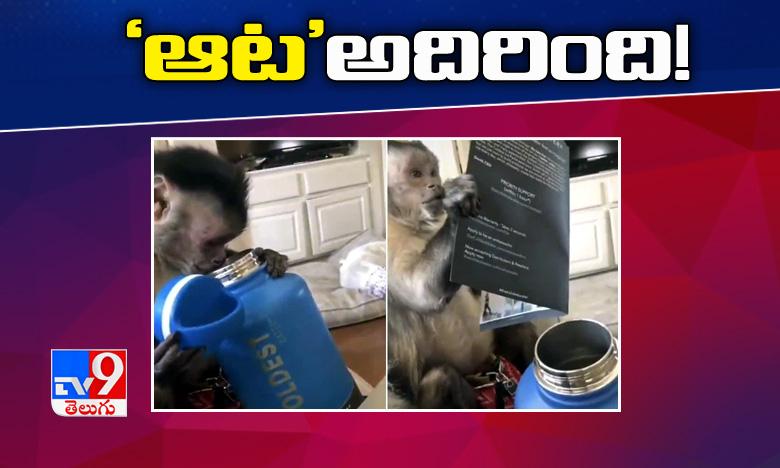Monkey's Delight, వాటర్ బాటిల్ తో కోతిగారి 'ఆట' అదిరింది !