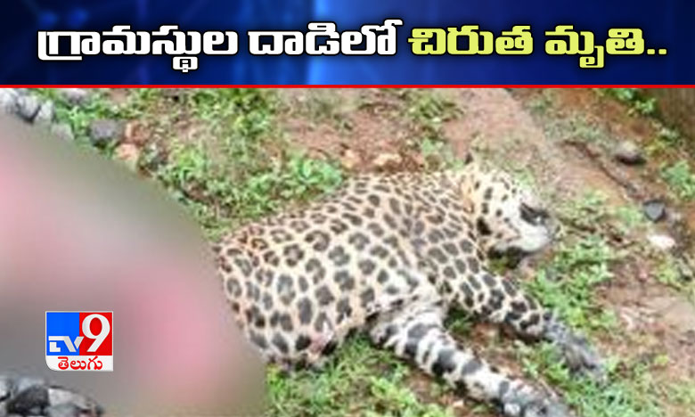 Leopard Found Dead Near Railway Track, గ్రామస్థుల దాడిలో మృతి చెందిన చిరుత