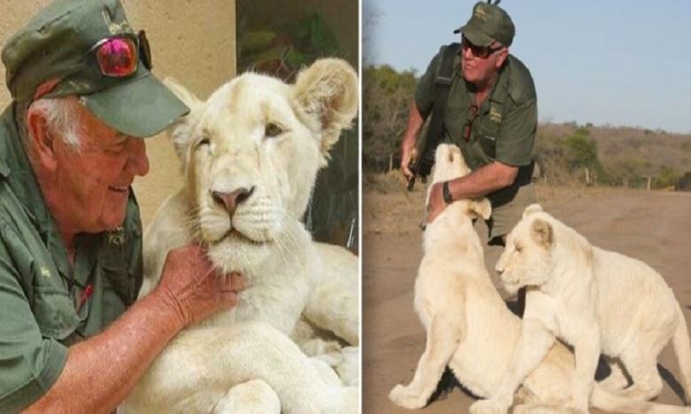Uncle West death by two white lions, అయ్యో పాపం…పెంపుడు సింహాలతో వాకింగ్ చేస్తుండగా..