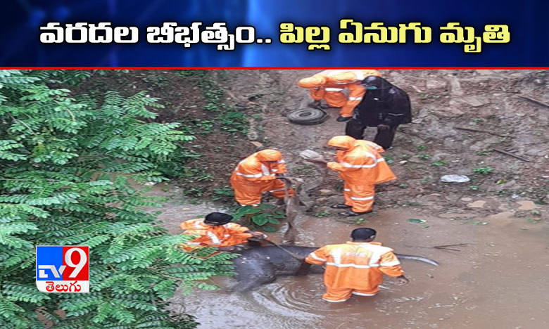 Baby Elephant Found Dead, వరద బీభత్సం.. ఏనుగు పిల్ల మృతి