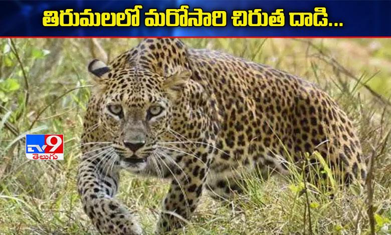 leopard attack on two wheelers in tirumala ghat road, తిరుమలఘాట్ రోడ్డులో ద్విచక్ర వాహనదారులపై చిరుత దాడి