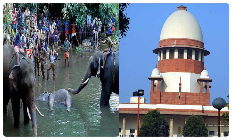 Elephants Killing, కేరళలో ఏనుగుల వధ, కేంద్రానికి, రాష్ట్రానికి సుప్రీంకోర్టు నోటీసులు