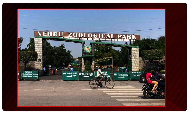 hyderabad nehru zoological park will open for visitors, తెరుచుకున్న జూపార్క్… ఇవాళ్టి నుంచి సందర్శకులకు అనుమతి