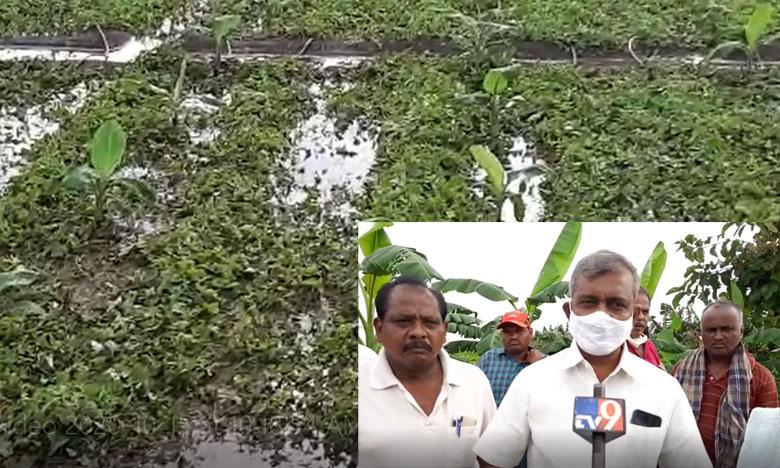 Crop loss in tadepalli area due to heavy rains and floods cpm leader baburao visit fields, తాడేపల్లి పరిధిలో పంటనష్టం.. సిపిఎం నేతల పరిశీలన