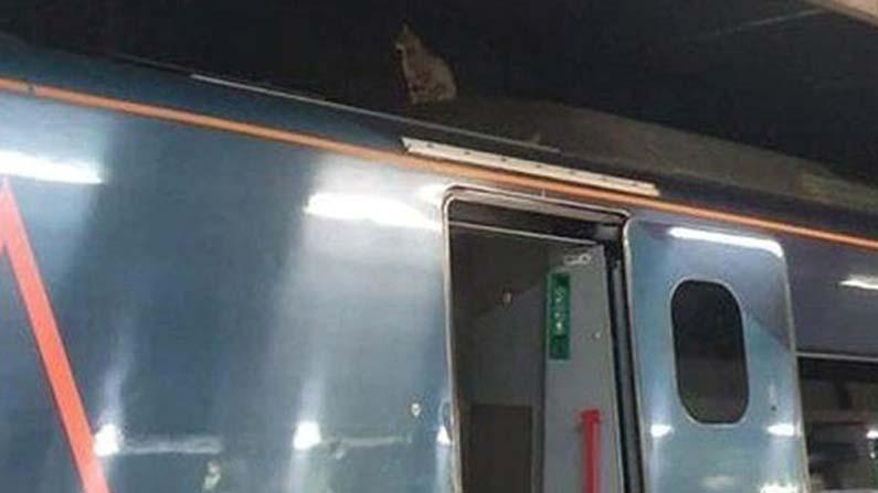 Cat-On-Train-Roof-
