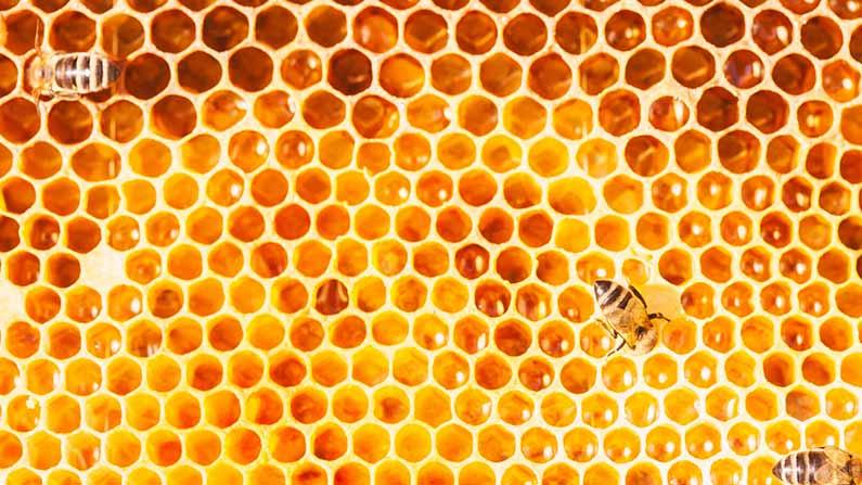 Health Tips honey Benefits Of Honey: All the health benefits of honey .. If you know, you will be shocked .. - Health Benefits Of Honey