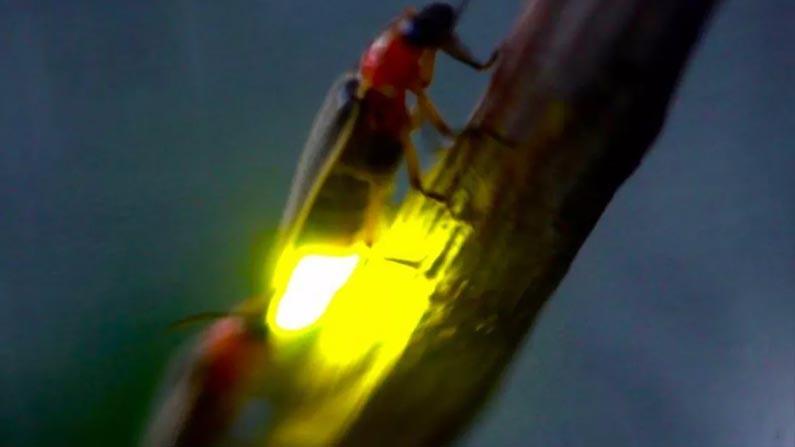 Fire Fly 2