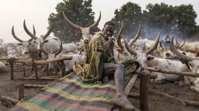 Tribe Worship Cows