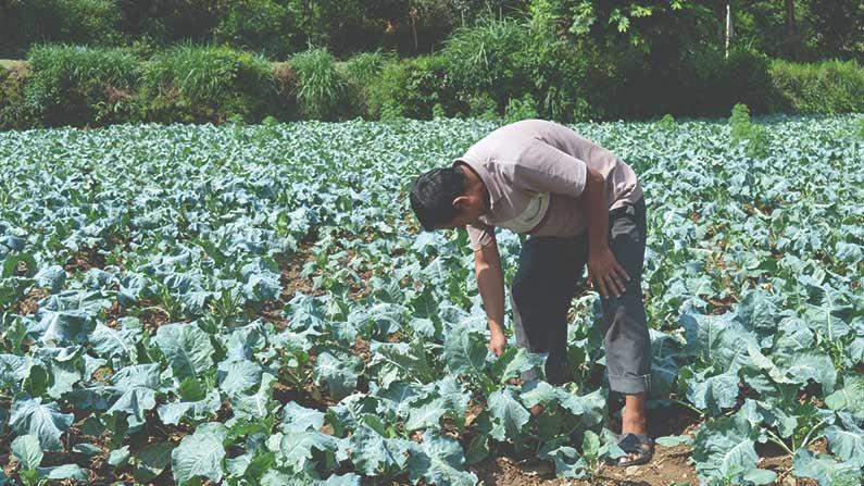 Vegetables Farmars 2