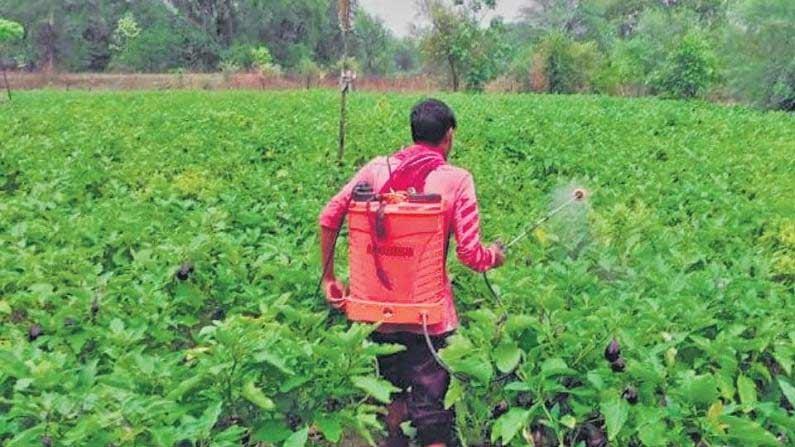 Vegetables Farmars