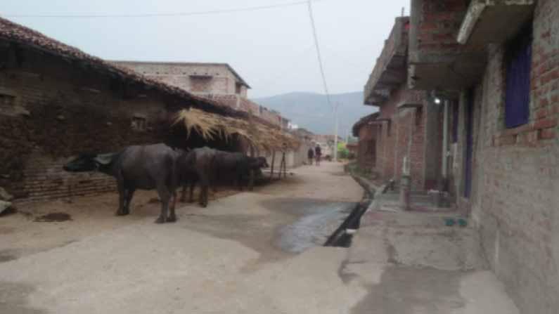 Vegetarian Village