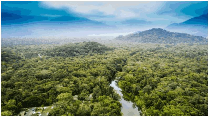 Amazon Forest 1