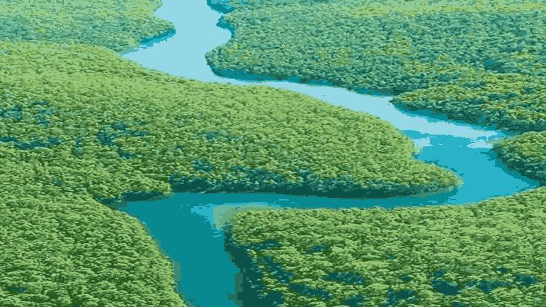 Amazon Forest 11