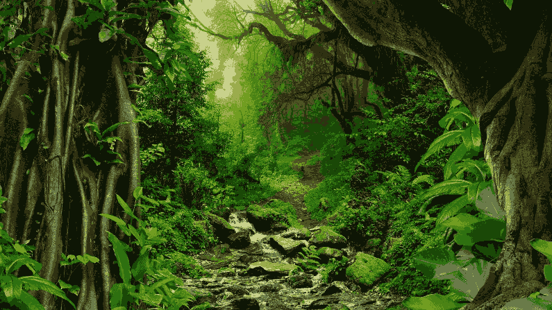 Amazon Forest 2