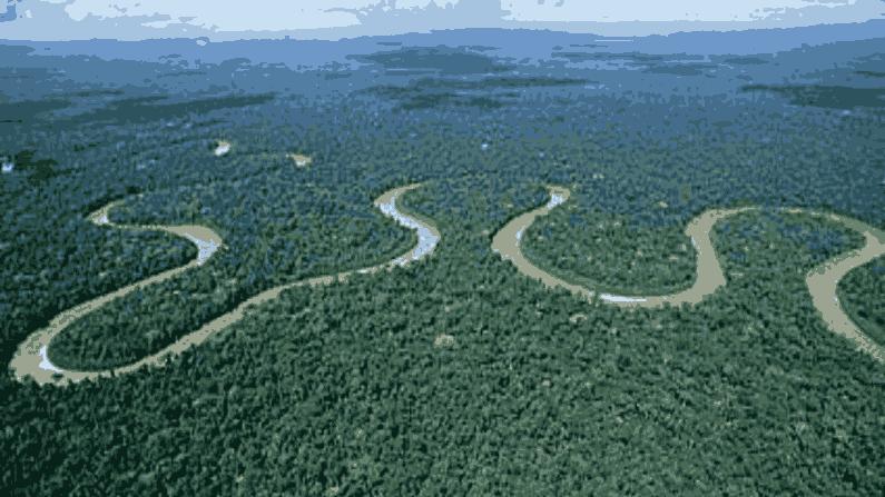 Amazon Forest 3