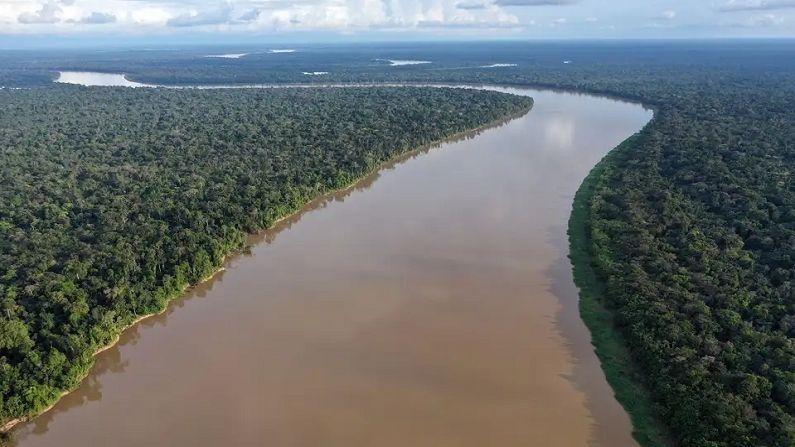 Amazon Forest 4