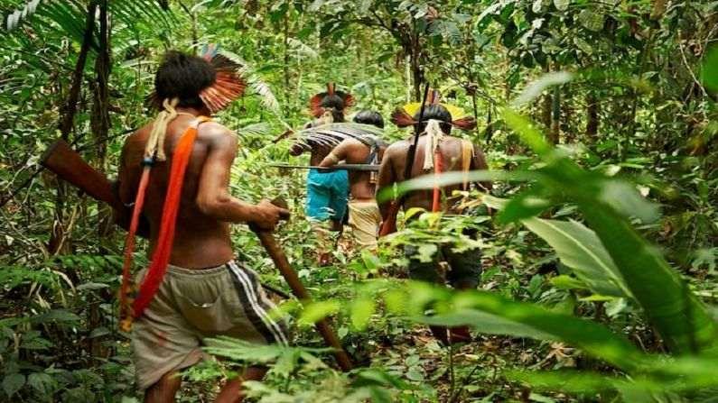 Amazon Forest 6