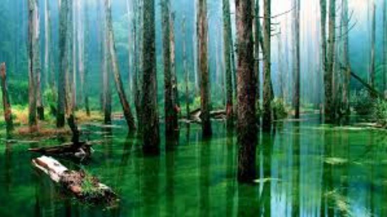 Amazon Forest 8