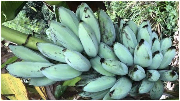 Blue Banana 2