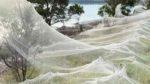 Massive Spider Web: ఎనిమిది కిలోమీటర్ల పరిధిలో రోడ్డు.. చెట్టు..పుట్ట అన్నీ సాలెపురుగుల గూటి కిందే ఎక్కడంటే..